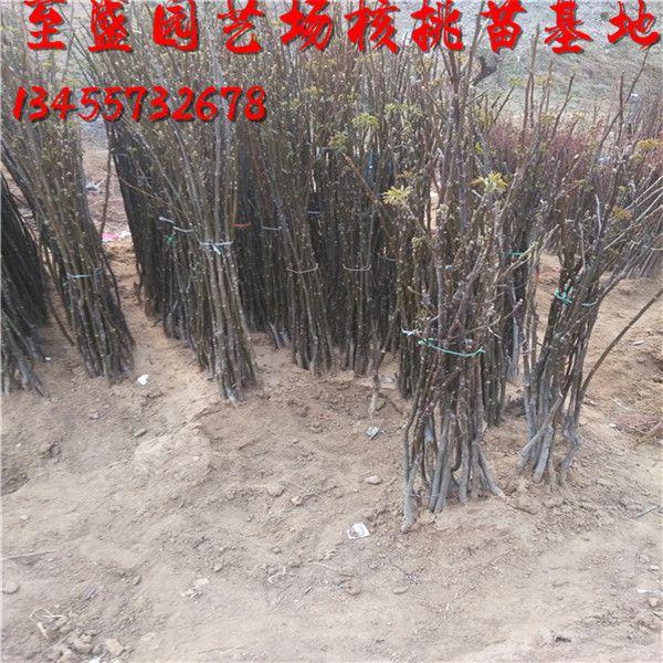 http://himg.china.cn/0/4_945_237282_600_600.jpg