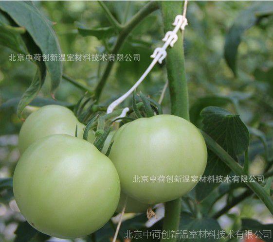 西红柿卡扣 落蔓夹 吊蔓夹 吊秧器 荷兰种植技术 黄瓜落蔓