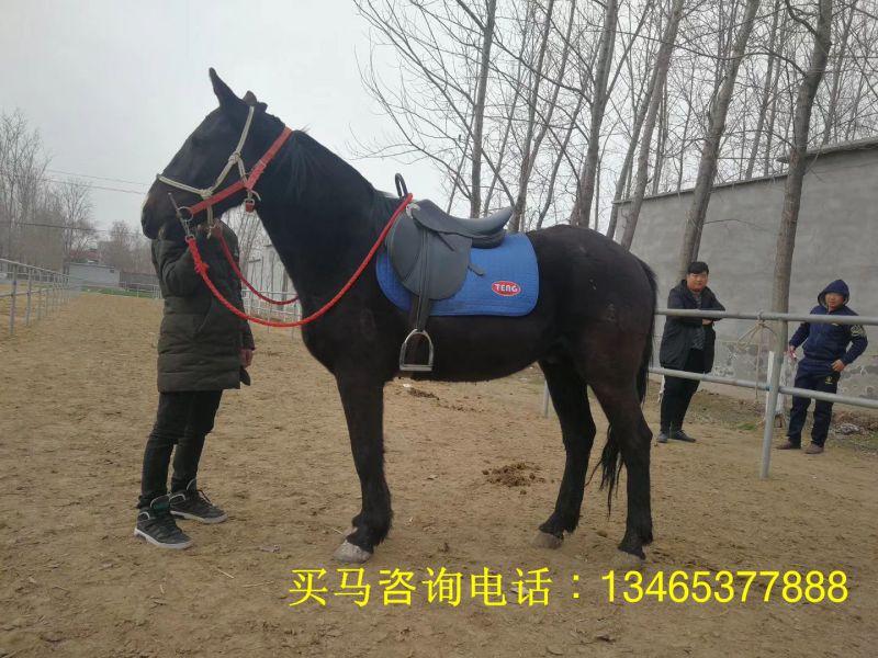 http://himg.china.cn/0/4_94_238180_800_600.jpg