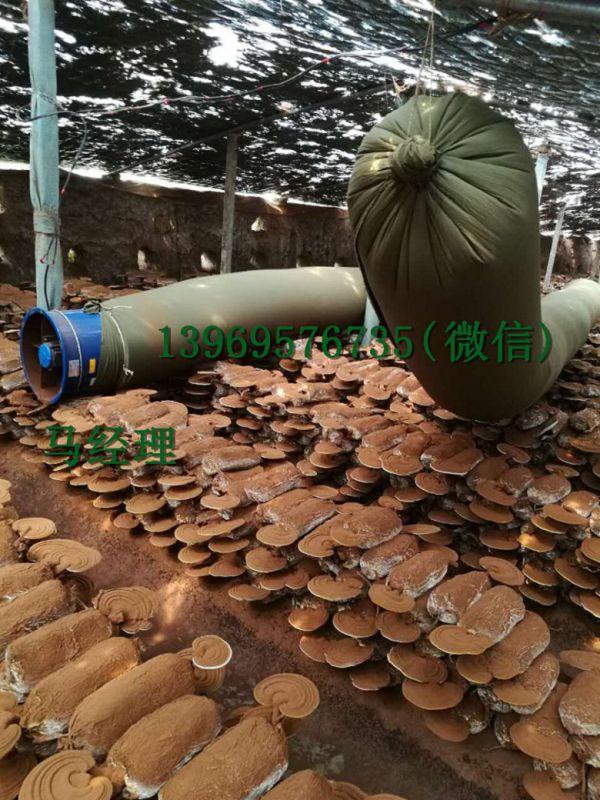 http://himg.china.cn/0/4_954_228632_600_800.jpg