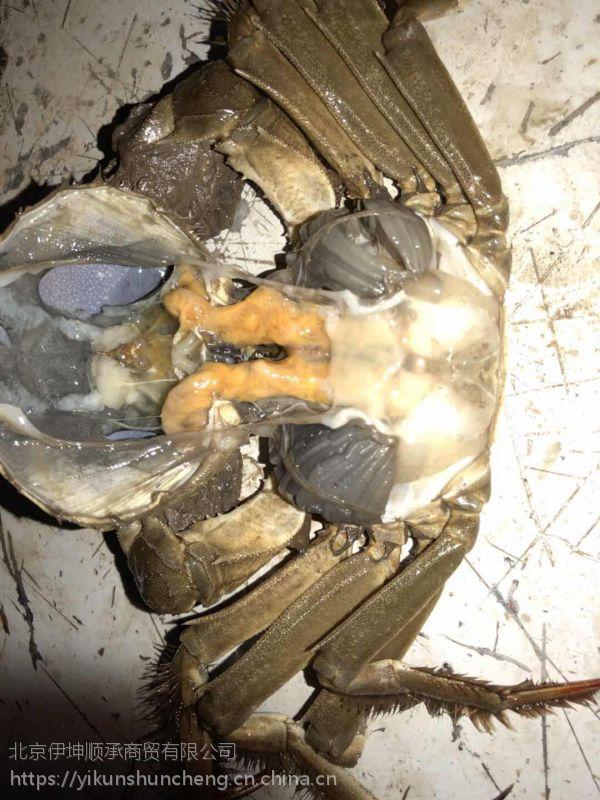 2.5两公鲜活大闸蟹 安徽无为螃蟹 食用螃蟹 冬季正常供应