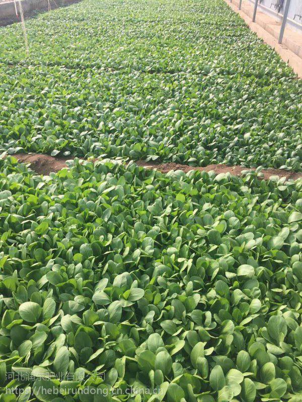 草坪专用肥 球场专用肥 绿化肥 生根 簇生长