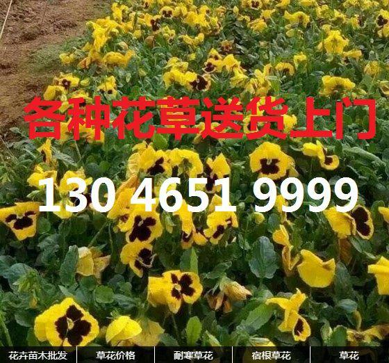 http://himg.china.cn/0/4_970_237052_560_522.jpg
