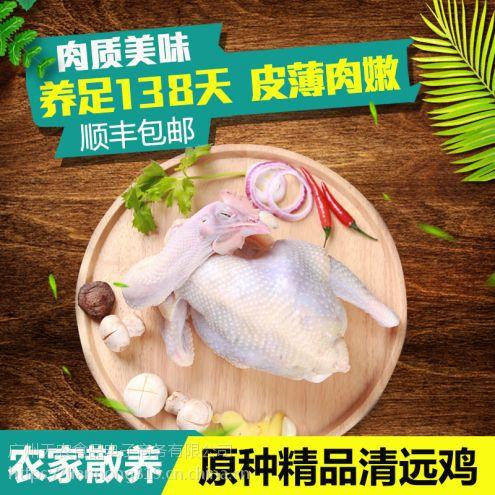 广州天农清远鸡-清远鸡批发|凤须土鸡