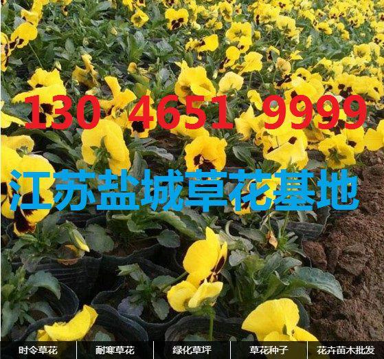 http://himg.china.cn/0/4_972_237046_559_522.jpg