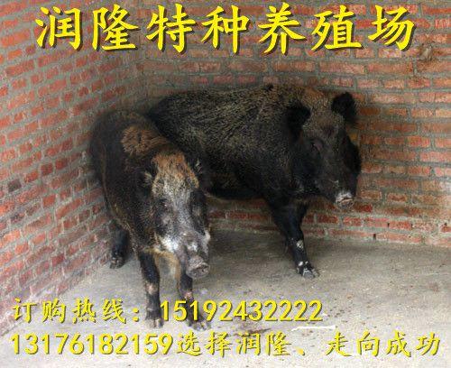 http://himg.china.cn/0/4_977_234184_500_408.jpg