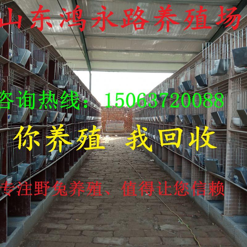 http://himg.china.cn/0/4_977_239264_800_800.jpg