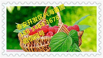 http://himg.china.cn/0/4_980_244486_400_228.jpg