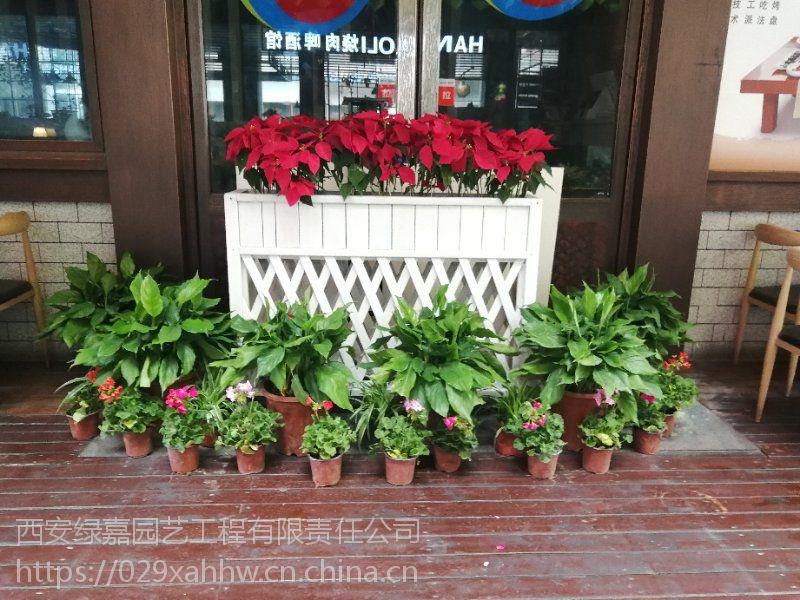 西安酒店绿植租摆 西安酒店绿植租赁 就找西安嘉禾苗圃