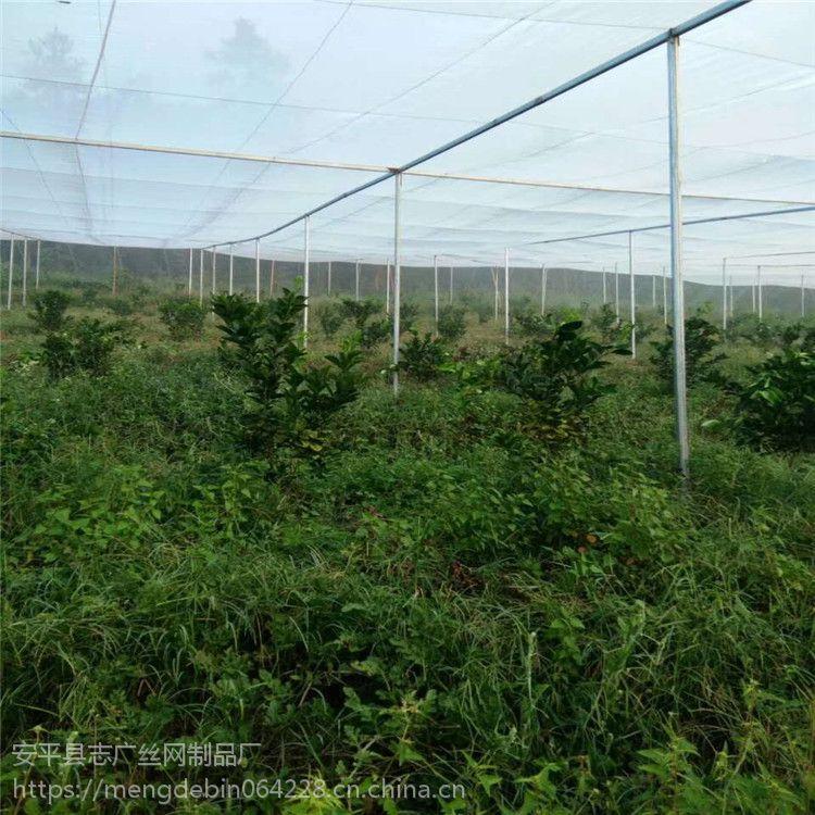 厂家直销各种韧性好抗老化果树柑橘防虫网结实耐用
