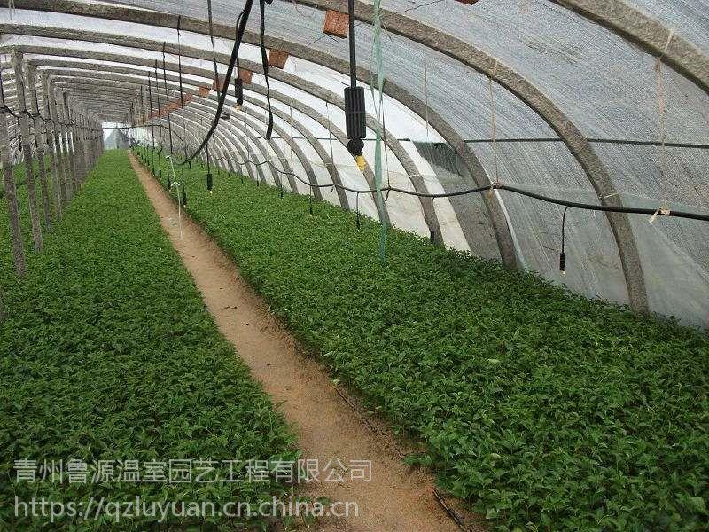 山东现代化茄子辣椒蔬菜育苗棚温室薄膜料、经济实用