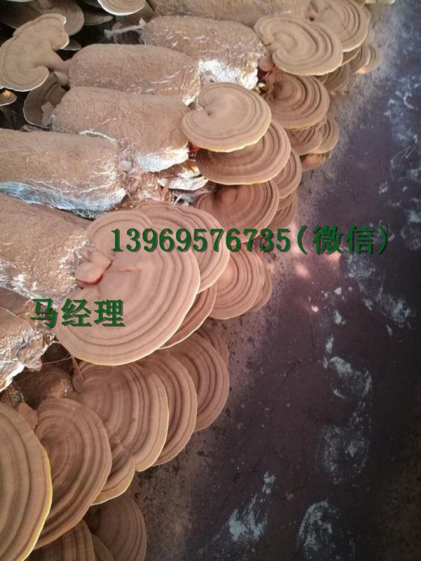 http://himg.china.cn/0/4_993_226718_600_800.jpg
