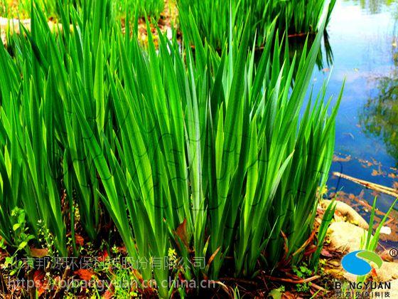 水生植物在水污染治理中起到什么作用呢