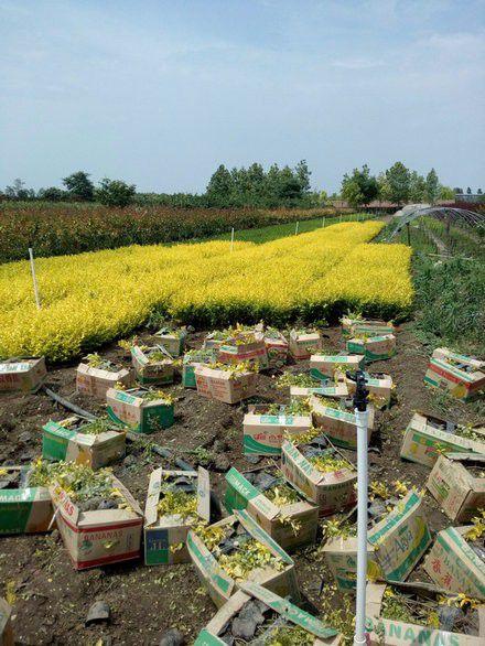 http://himg.china.cn/0/5_1015_1008161_440_586.jpg