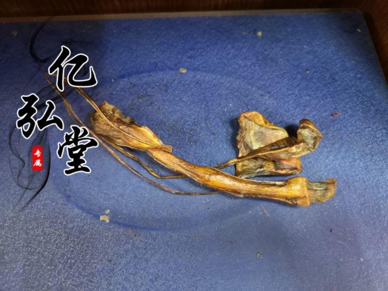 海狗鞭 海狗肾实物拍摄视频