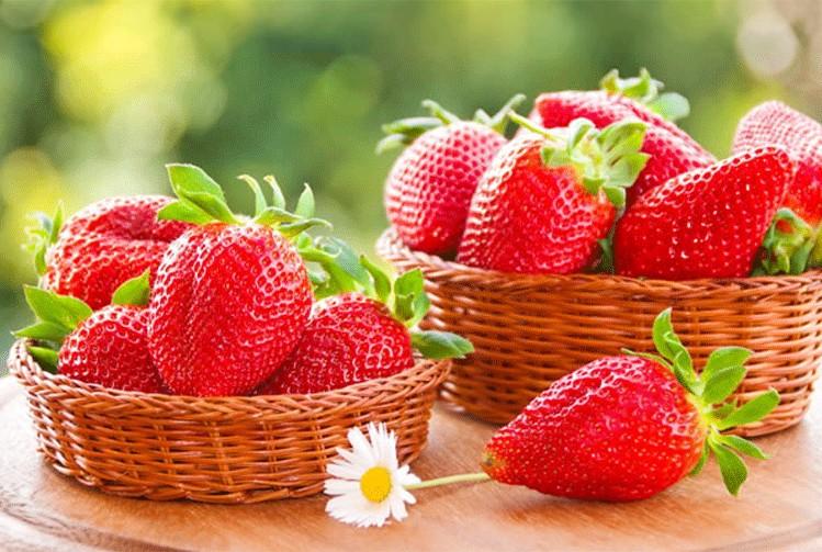 如何种植你爱吃的草莓?