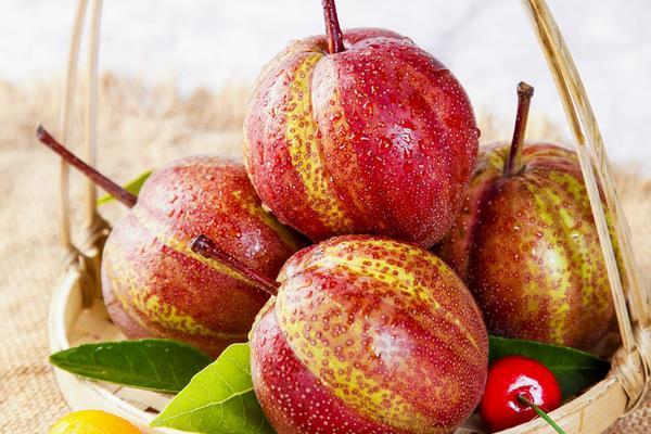 味美独特的新型梨子如何种?——早酥红梨的成长