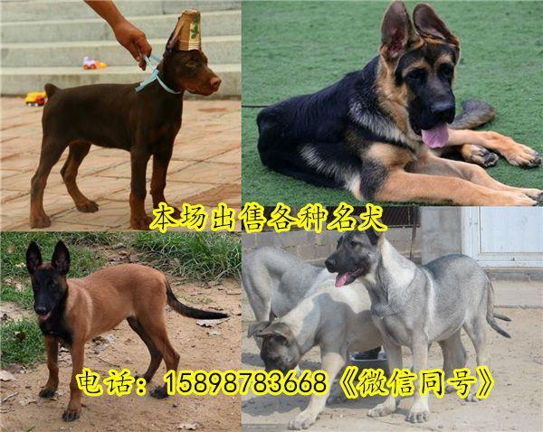 http://himg.china.cn/0/5_122_1277617_600_478.jpg