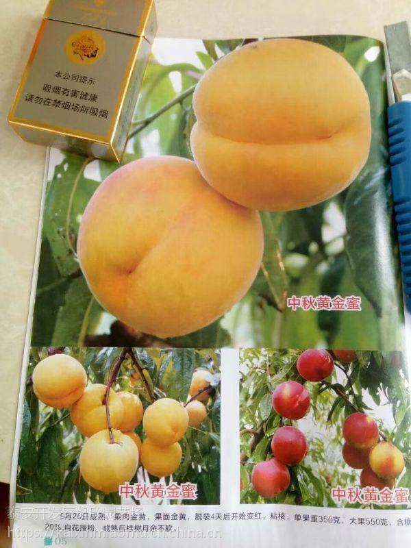 美夏金蜜桃苗多少钱 美夏金蜜桃苗栽培要点