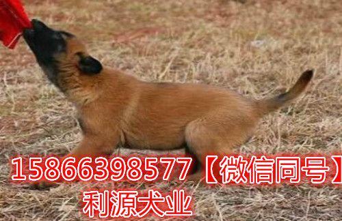 http://himg.china.cn/0/5_137_1118191_500_324.jpg