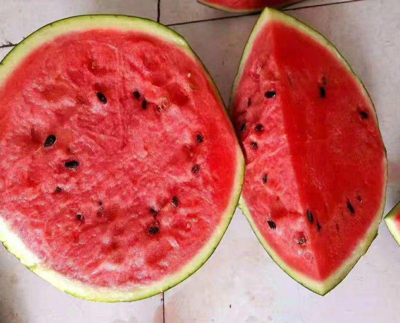 精品改良甜王第四代甜王西瓜种子双红518个更大瓤更红品质更高