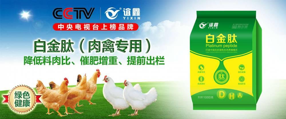 肉鸭吃什么长得快  肉鸭吃什么增重快  肉鸭催肥药