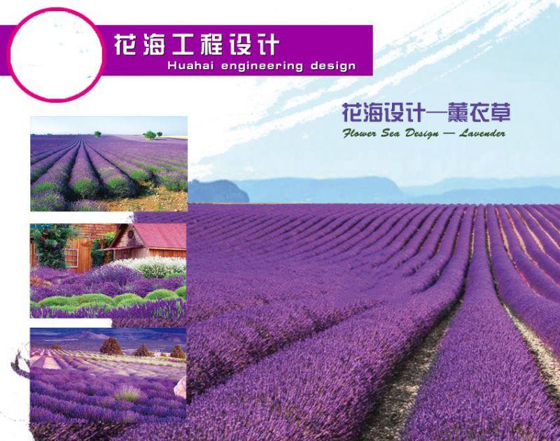 http://himg.china.cn/0/5_179_1038613_800_630.jpg