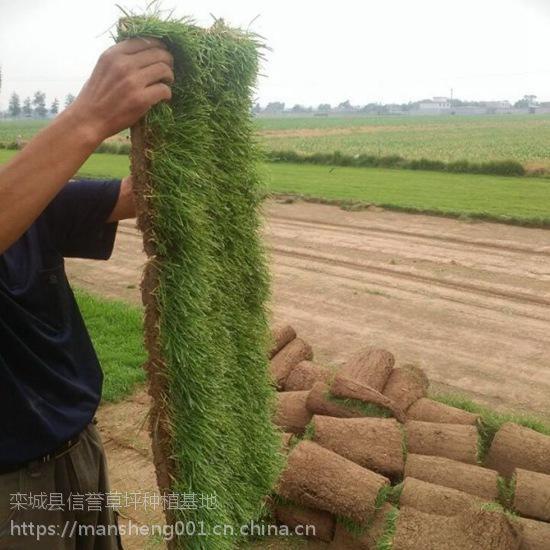 河南草皮出售 内蒙四季青草坪价格 山东草皮