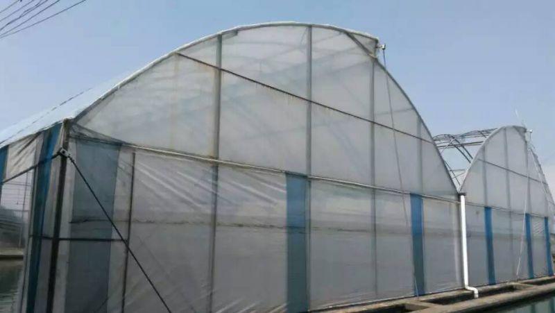 广州蔬菜大棚建设安装中