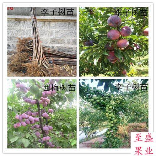http://himg.china.cn/0/5_191_1321891_497_497.jpg