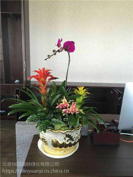 北京花卉租赁公司绿植租摆