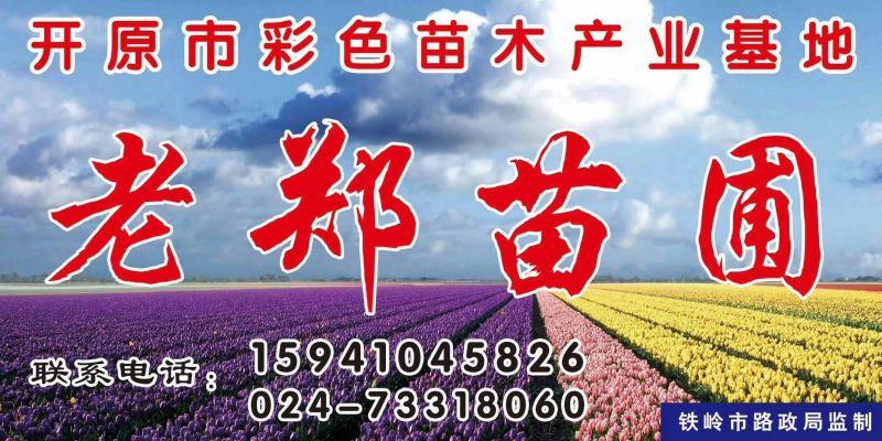 辽宁.开原彩色苗木花卉产业基地-靠山镇老郑苗圃
