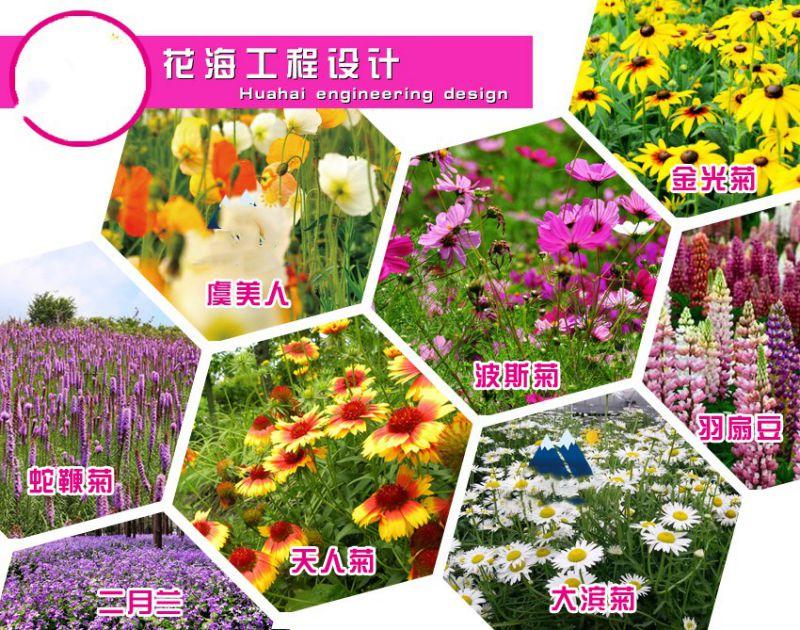 http://himg.china.cn/0/5_233_1038607_800_630.jpg