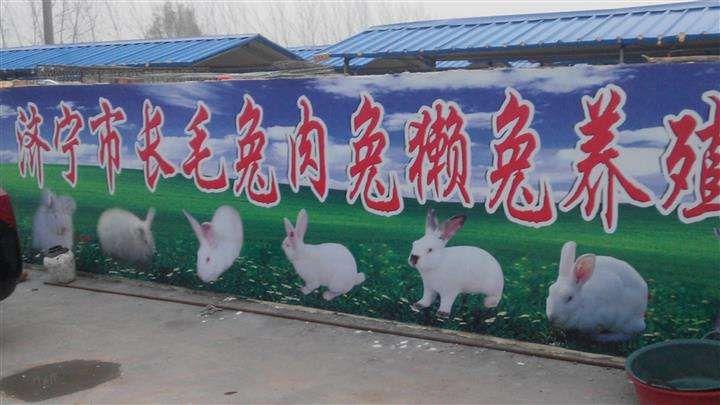 滨州哪里有卖一拉兔的