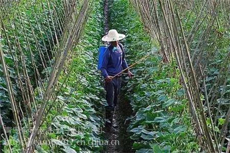 叶面肥与农药混用会发生肥害药害吗?—卡希诺