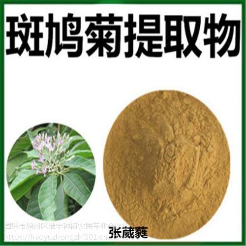 固原浩宇种植供应 斑鸠菊提取物20:1 速溶粉 超微粉
