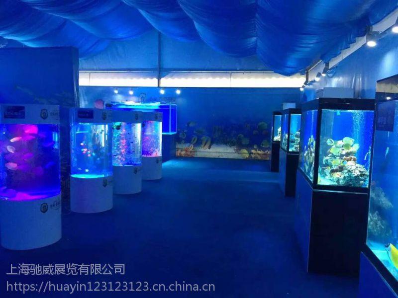 海狮表演租赁 海洋系列做展案例 高品质商业互动
