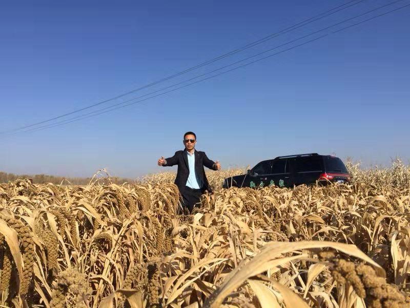 东北不寒冷因为每天都要发货 有机黄小米团购开始啦!