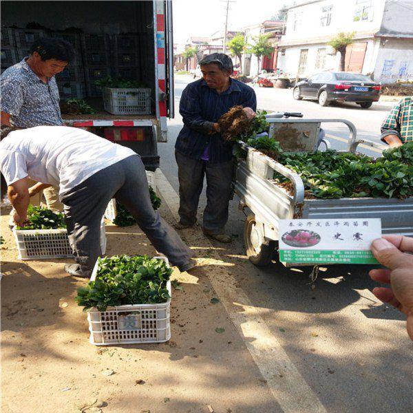 http://himg.china.cn/0/5_367_1017435_600_600.jpg