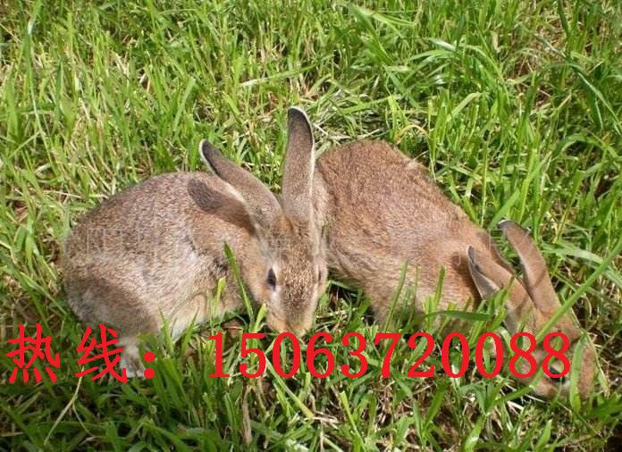 http://himg.china.cn/0/5_406_1016093_696_506.jpg