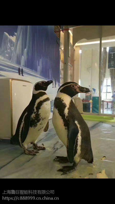 灯会 灯光展出售 百鸟展 萌宠展 海洋展 企鹅展 出租