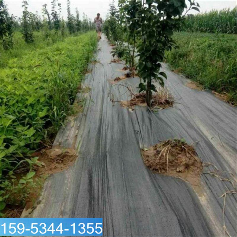 2米宽果园防草布的铺盖法