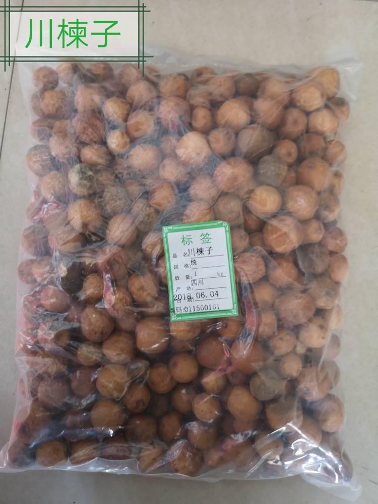 苦楝子价格@川楝子批发价格哪里可以购买多少钱一公斤