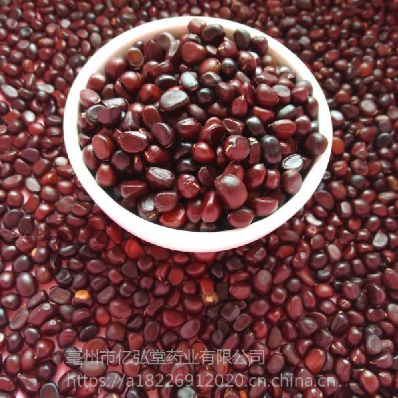 优质高产赤芍药种子批发价格哪里可以购买多少钱一公斤