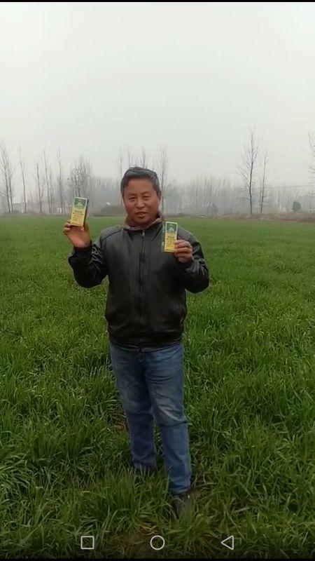 小麦使用稼稼乐公司根苗康反馈