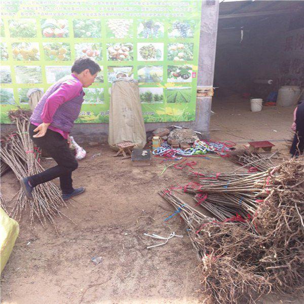 http://himg.china.cn/0/5_454_1350243_600_600.jpg
