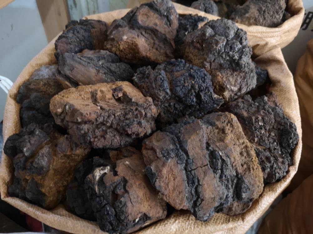 进口白桦茸产地批发价格 哪里购买多少钱一公斤