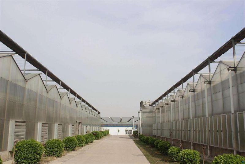 肇东市四层阳光板厂家