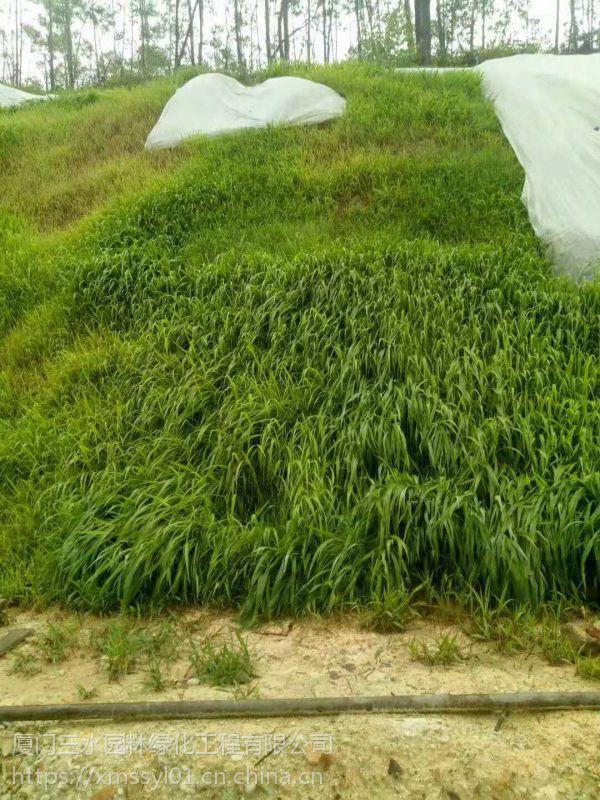铜仁荒山植草绿化常用的草籽草种出售