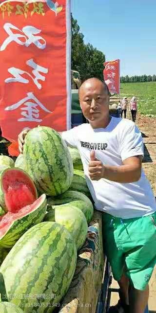沈阳双红种业双红金五西瓜种子2018表现超强